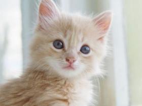 了解猫咪流行性感冒和传染性鼻气管炎