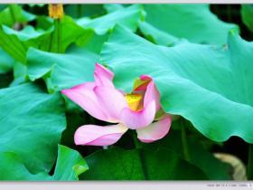 懒人迟发的作业,暑期杭州游记