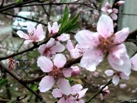 清明春雨后,百花更娇艳