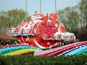 清明北京玉渊潭 游客尽享樱花雨