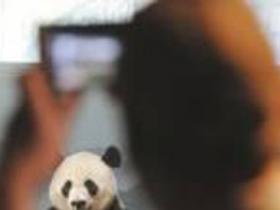 大熊猫啃坏的筐子被美当文物