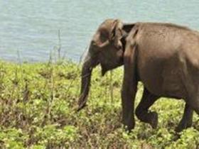 中国员工斯里兰卡救野生幼象