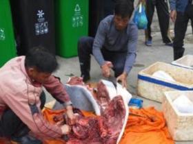 广东当街宰售海豚.10元1公斤