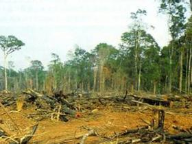 老汉为扩坟地砍伐国有林木