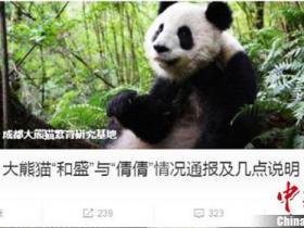 大熊猫和盛野化放归期间死亡