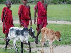 联合国:1亿人粮食安全无保障