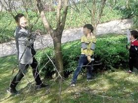 夫妻为拍照抱着樱花树猛摇.图