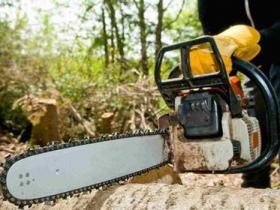 男子无许可证砍自家树木被罚