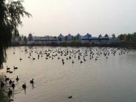 """湿地观鸟园去这里,邂逅台儿庄真正的""""鸟类天堂"""""""