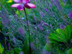 雨落在七月的台儿庄运河湿地:小雨淅沥漾起别样的情意!