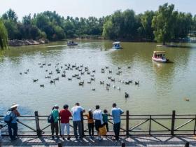 台儿庄双龙湖观鸟园:古城后花园,生态湿地,百鸟天堂