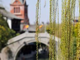 胜日寻芳台儿庄   古城是厚重的、写意的、古朴的、深情的……