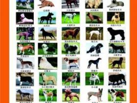 河南公布禁养犬只名录 50类犬在禁养范围(图)