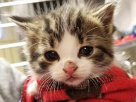 英国落实领养替代购买 将立法禁宠物店售幼猫幼犬