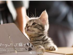 电影:咕咕是一只猫