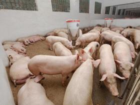 我国有全球一半的猪,老百姓却吃着40一斤的猪肉,钱被谁赚了?