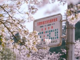 武大的樱花,开了丨武汉来信10