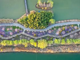 春暖花开,为你而来 | 双龙湖湿地观鸟园带你感受春天的颜色!