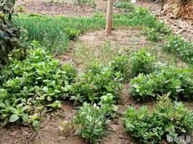 20种自制营养土,肥的流油,不用花钱买