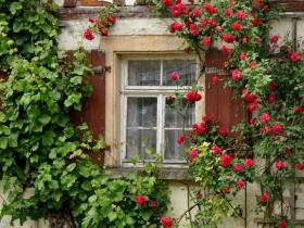 平民小窗台,这么养花,日子才精彩~