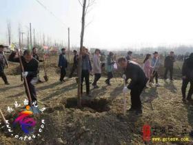 台儿庄区今天组织开展义务植树活动