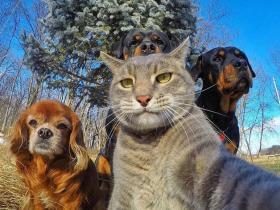 """宠物也爱玩""""自拍"""":猫咪用狗做背景自拍"""